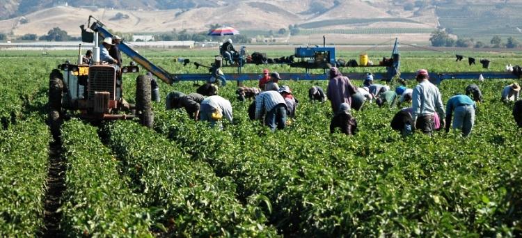 Photo of Approvato il Piano nazionale contro lo sfruttamento e il caporalato in agricoltura