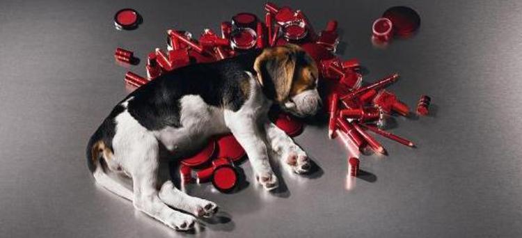 Photo of UE: Stop ai cosmetici testati su animali. D'ora in avanti ammessi solo i 'cruelty free'