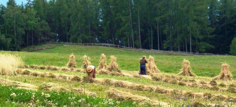 Sgravi Contributivi Spettanti Agli Imprenditori Agricoli Che Operano In  Zone Montane O Svantaggiate Estesi A Cooperative