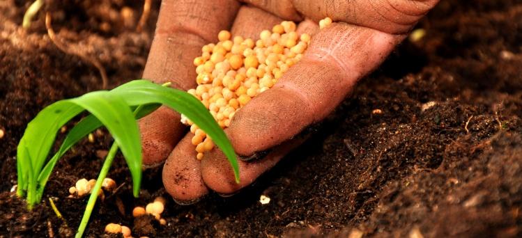 Photo of Solo al coltivatore i vantaggi sull'acquisto del fondo agricolo