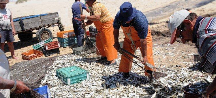 Anche per il settore pesca la legge di Stabilità 2014 ha assegnato la somma di 30 milioni di euro al finanziamento della CIG in deroga