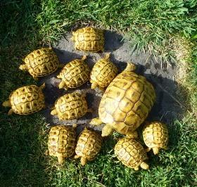 All'elenco preesistente delle categorie che, nel rispetto dei limiti previsti dal Tuir, danno luogo a reddito agrario sono state aggiunte le tartarughe e alcuni camelidi: alpaca, lama e guanaco